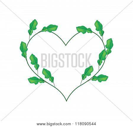 Kaffir Lime Leaves In A Heart Shape