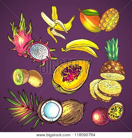 vector tropical fruit