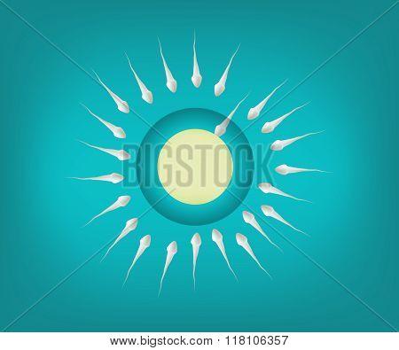 Fertilized ovum,sperm and egg cell