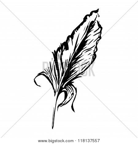 bird feather, symbol of knowledge, writing and learning. Vector black and white illustration in vint