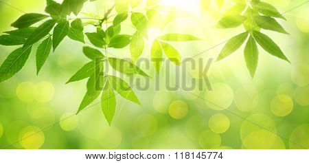 fresh and green leaves,nature background.