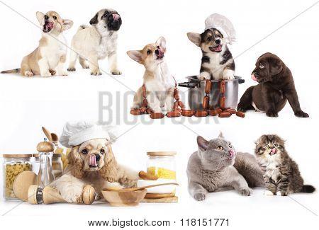 puppy in chef's hat