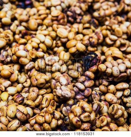 Coffee beans from the civet for background.