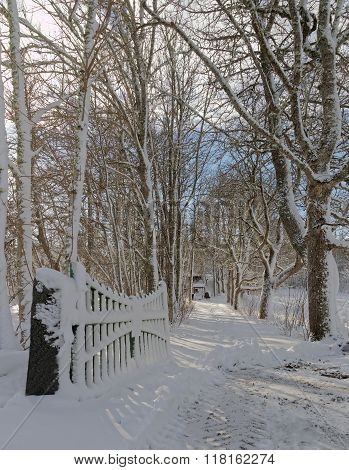 Open Gate And A Snowy Alley Of Trees A Winter Day
