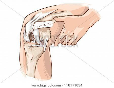 White Background Vector Illustration Of A Knee