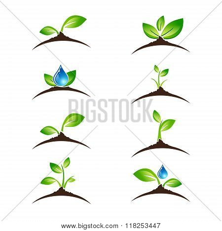 Green Sprout Icon Or Logo Design Set