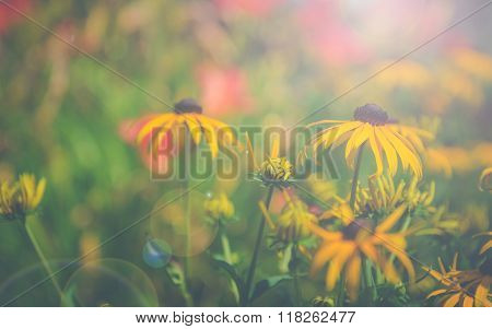 Vintage sunflowers with sun flare