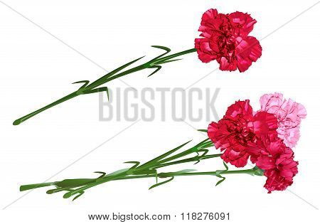 Red clove. Bouquet of carnations. Set carnation flowers