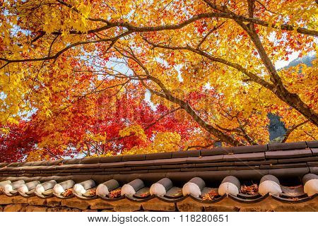 Roof of Gyeongbukgung and Maple tree in autumn in korea. poster