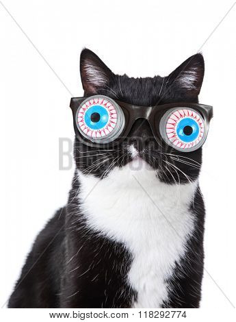 Black and White tuxedo cat wearing funny spring eyeball glasses