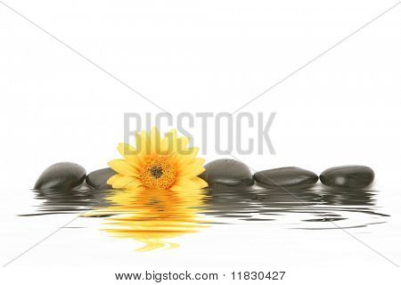 Spa stones and yellow daisy on isolated white background
