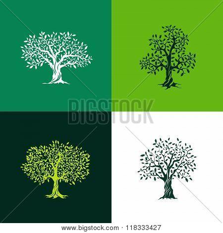 Olive_tree_set