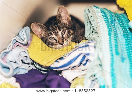 Little Kitten Hiding In The Laundry Box