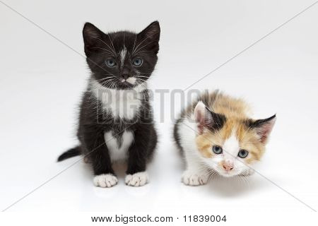 Two small cats