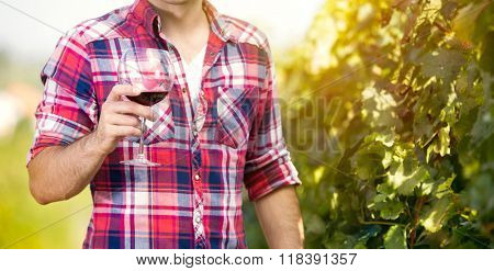 Winegrower with wine glass in the vineyard.
