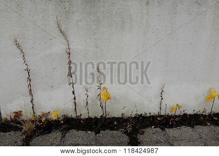Withered Plants On The Background Of A Concrete