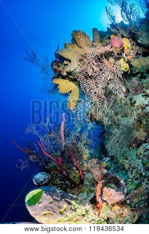 Delicate, colorful coral reef