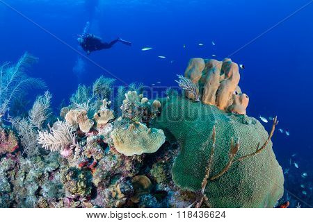 SCUBA Diver on a Caribbean Reef