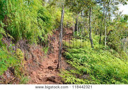 Hiking Trail In Cockscomb Basin Wildlife Sanctuary, Stann Creek, Belize