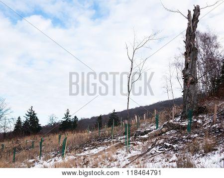 Tree Nursery Plantation