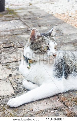 Young Cat In Home Garden
