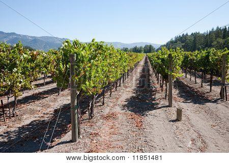 Weinanbaugebiet Nappa Valley Nappa Usa
