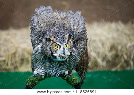 Eagle Owl/an Eagle Owl