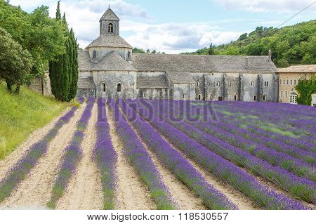 Abbey of Senanque and blooming rows lavender flowers. Gordes Luberon Vaucluse Provence France Europe.