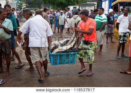 BERUWALA, SRI LANKA - NOVEMBER 16, 2015 : Fisherman selling shark.People buying fresh raw fish on market