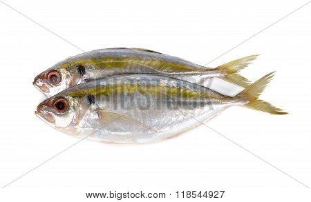 Whole Round Fresh Yellow-stripe Scad Fish On White Background