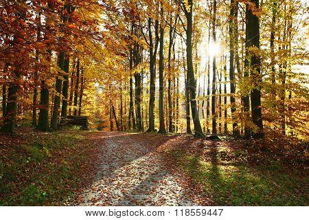 Ravnsholt Skov Forest In  Alleroed Denmark