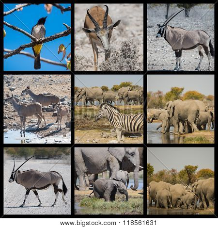 Animals and desert landscape in Namibia Africa