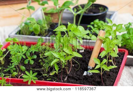 Plantlets, Seedlings, Plant Cultivation