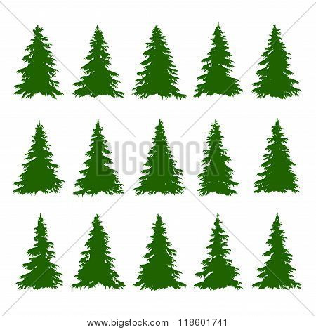Conifer Trees Set on the white background for Making Forest Backgrounds. Vector
