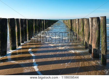 Rows Of North Sea Breakwaters At Low Tide