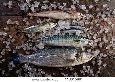 Fresh fishes mix hake sea bass sardine mackerel anchovies on ice and wood