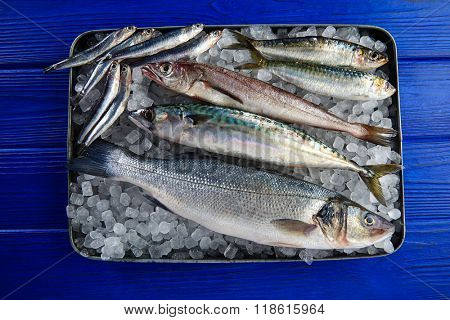 Fresh fishes mix hake sea bass sardine mackerel anchovies on ice and blue wood
