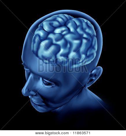 Human brain x-ray view.