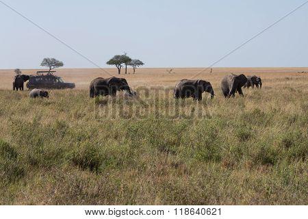 An Elephant Family Walking Across The Savannah