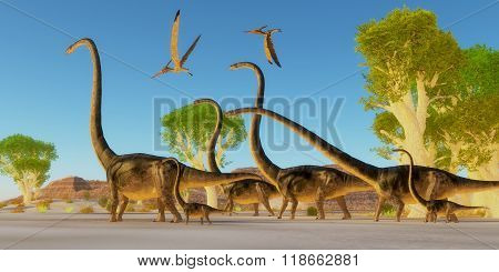Two Pteranodon reptile birds fly over a herd of Omeisaurus dinosaurs traveling through a Jurassic forest. poster