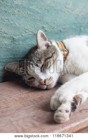 Thai Cat Sleeping In Garden Home