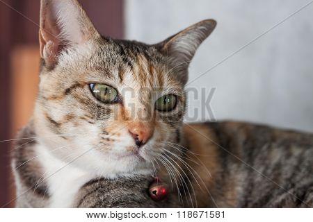 Thai Cat Pose At Home