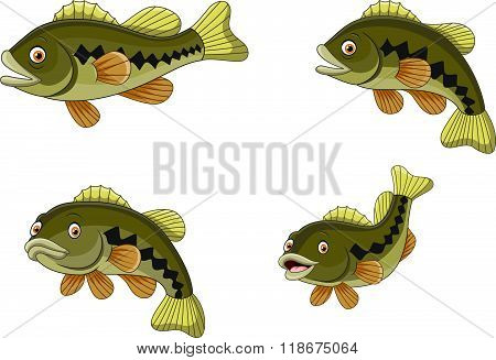 Cartoon funny bass fish collection