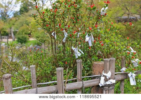 People tie fortune-telling paper strips called Omikuji around the branches of red Japanese Quince tree in Kyoto, Japan