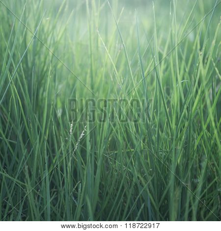 Green grass pattern. Beautiful and tranquil nature background.