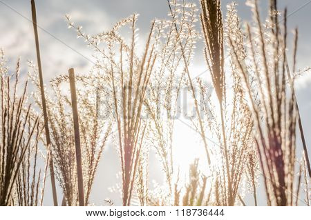 Dry Grass Texture Over Sun Beams. Winter Background With Sedge Dry Grass, Grey Frozen Sky, White Clo