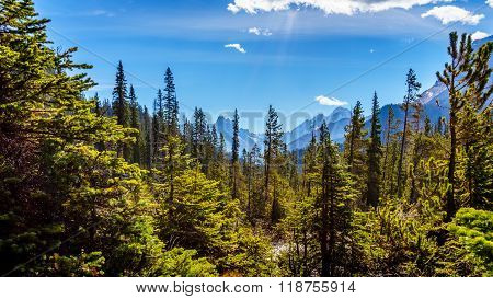 Mountain Peaks and Forests in Yoho National Park  in the Rocky Mountains