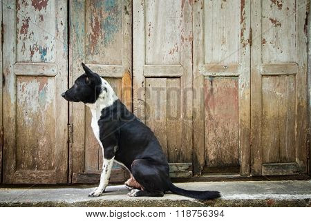 Dog sitting in front of the wood door.