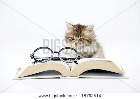 Little Persian kitten reading a book on isolated