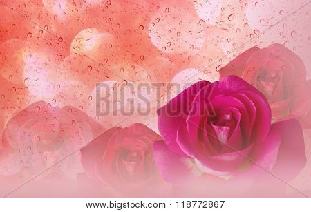 Romantic Pink Roses And Water Drop Abstract Orange Pastel Valentine Background